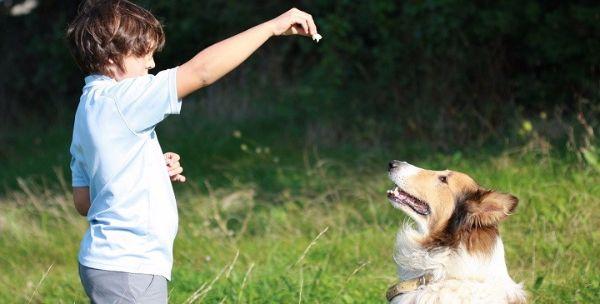 Educar mascotas