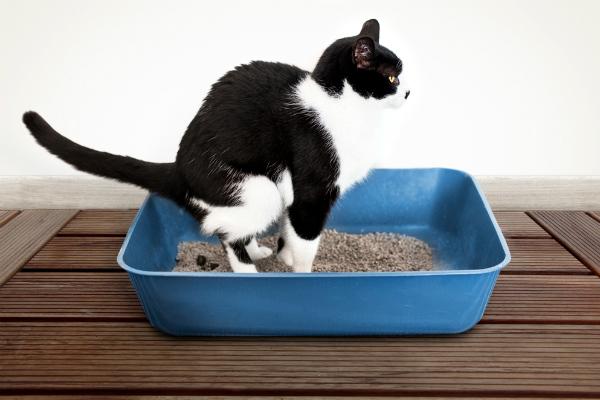 Gato con problemas renales