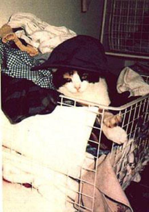 gatos de Freddie Mercury