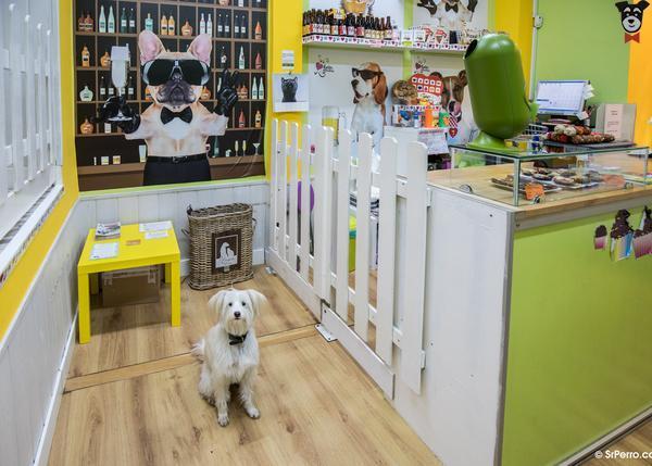 Bar para perros