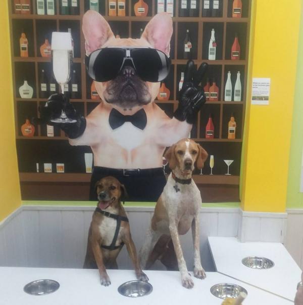 bar belfos para perros
