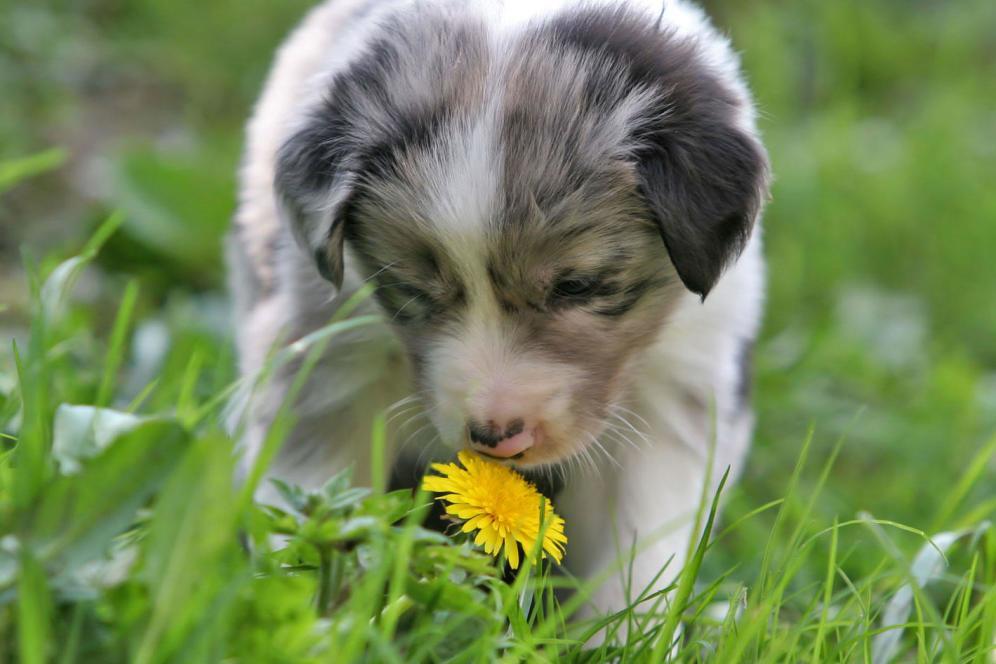 cachorro olfato