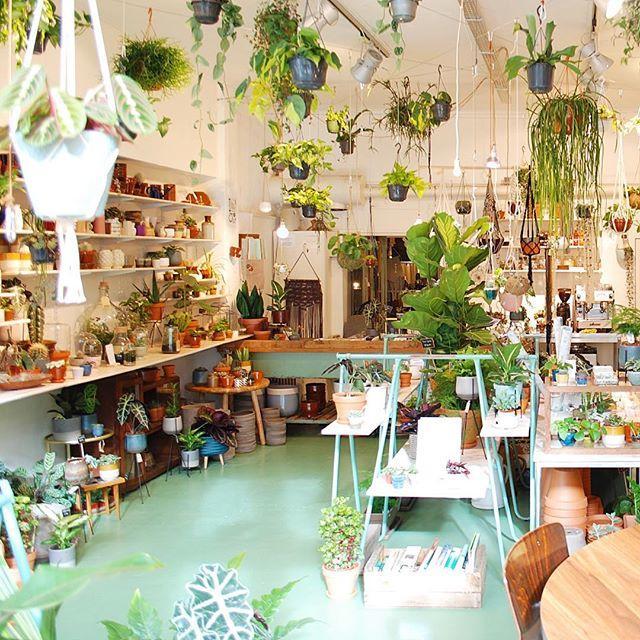 tienda plantas