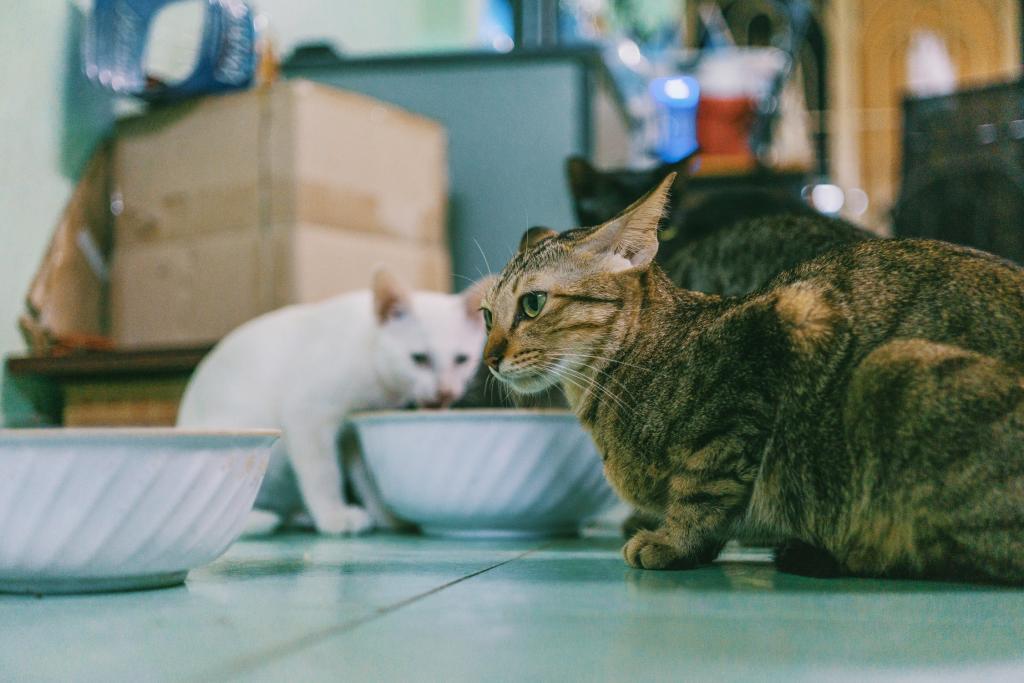 gato alimentos