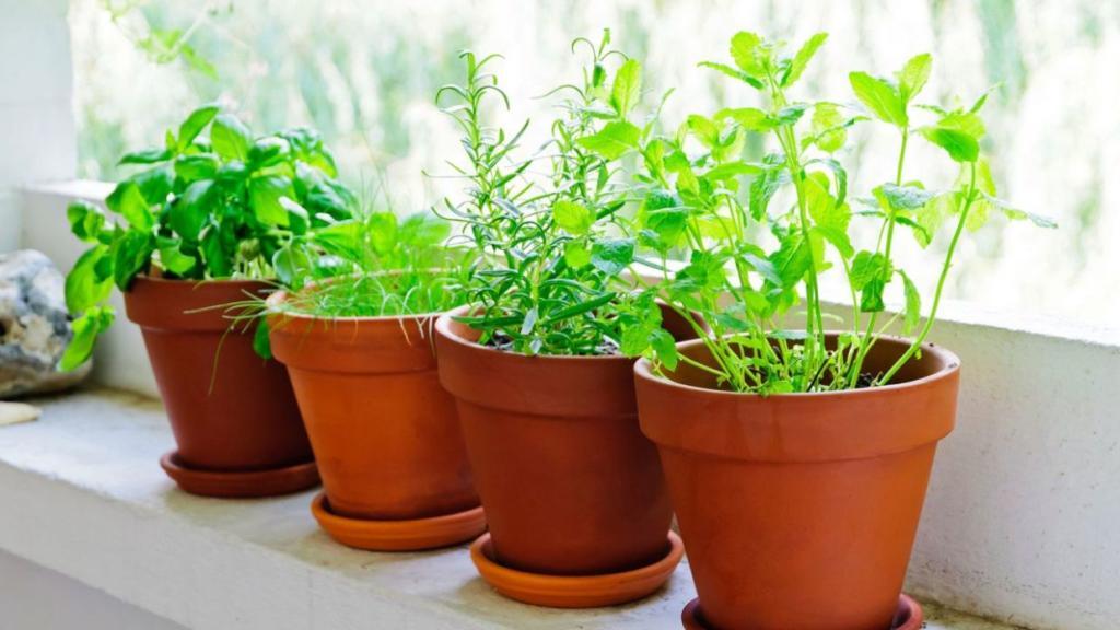 Macetas con plantas insecticidas naturales