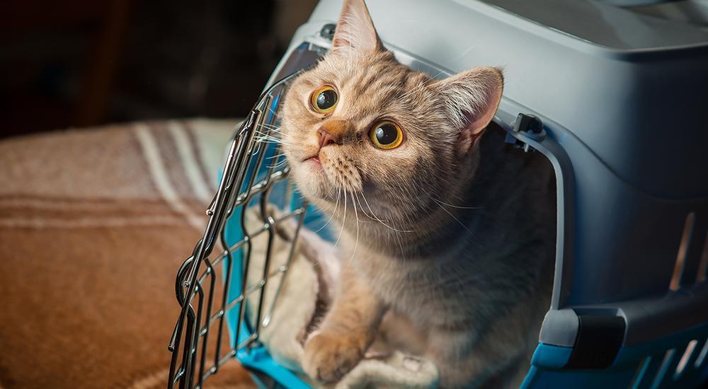 gato calmado