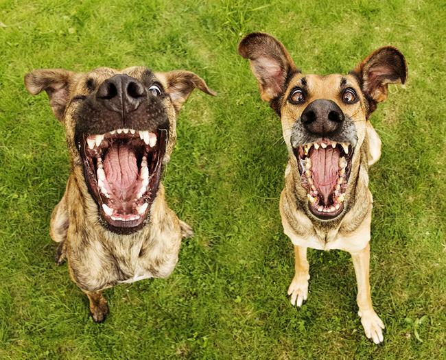 perros molares