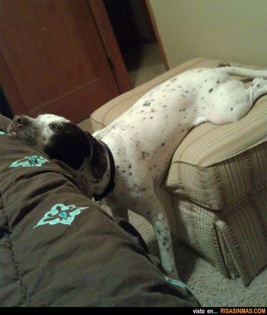 perro patas locas