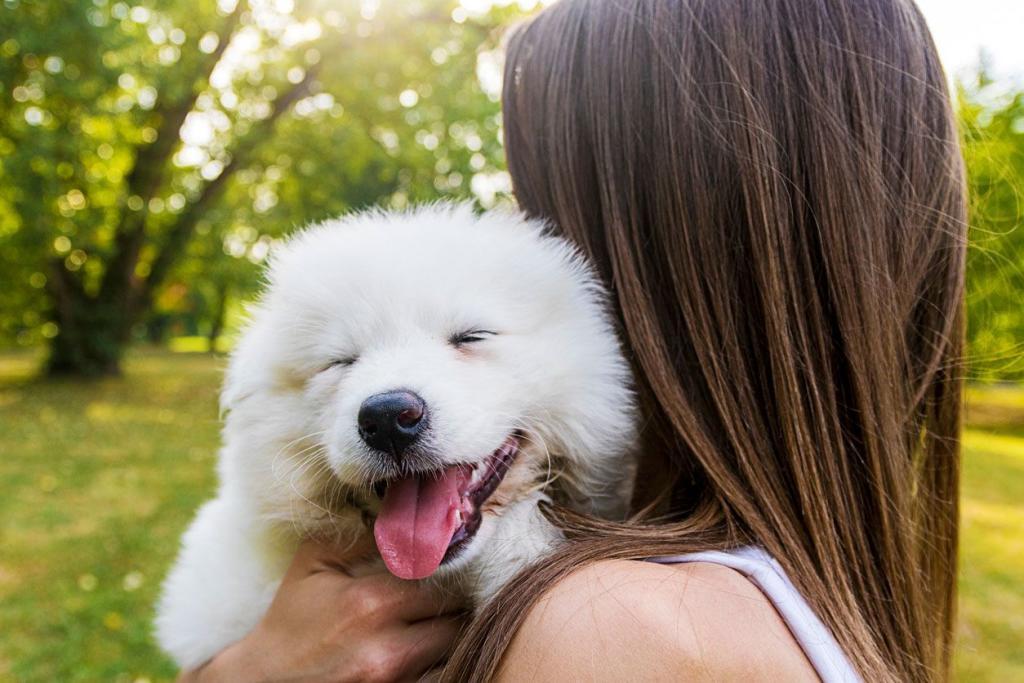 cachorro dientes