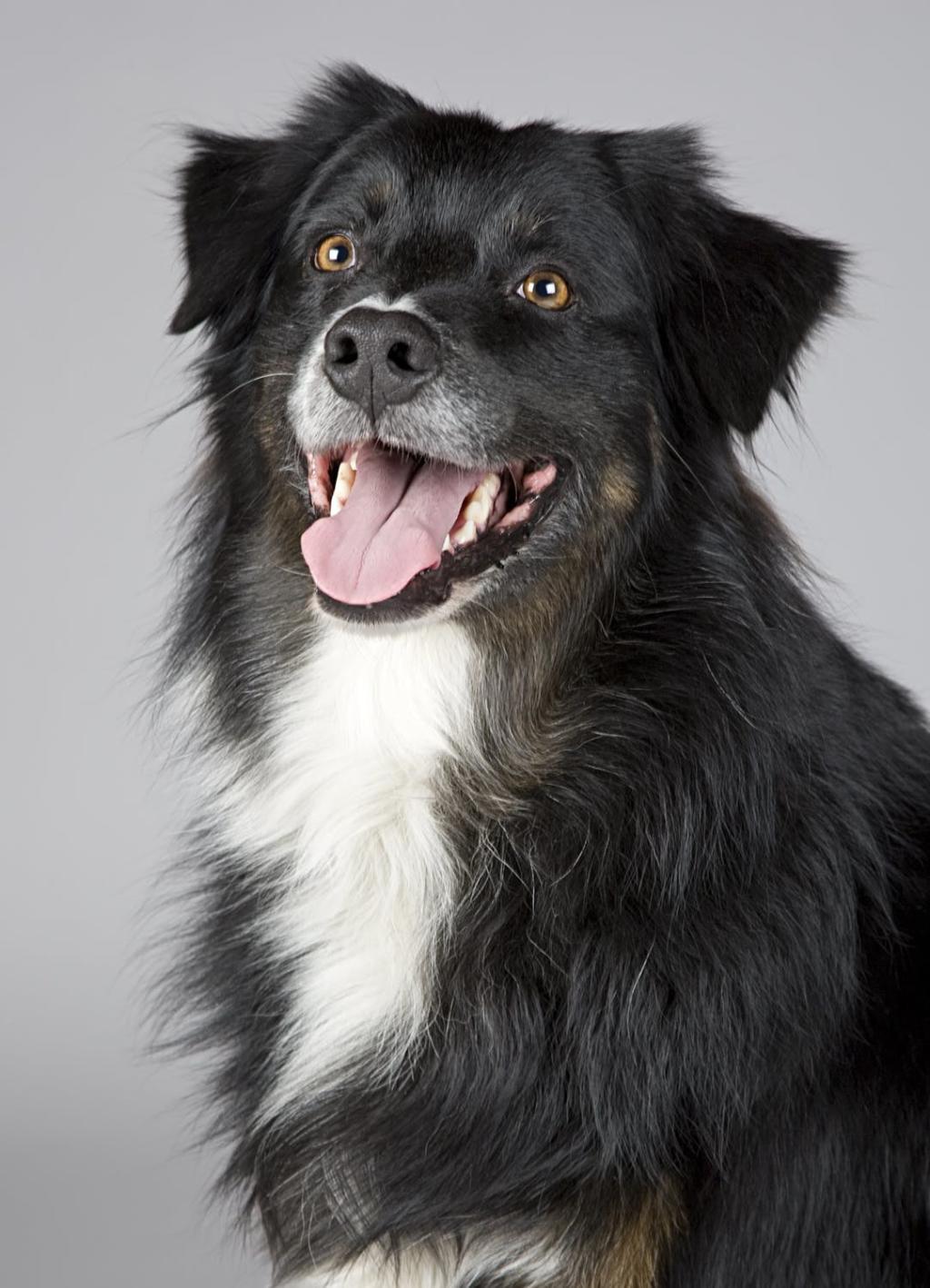 perros dentadura
