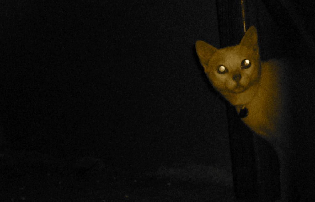 gatos vision noche
