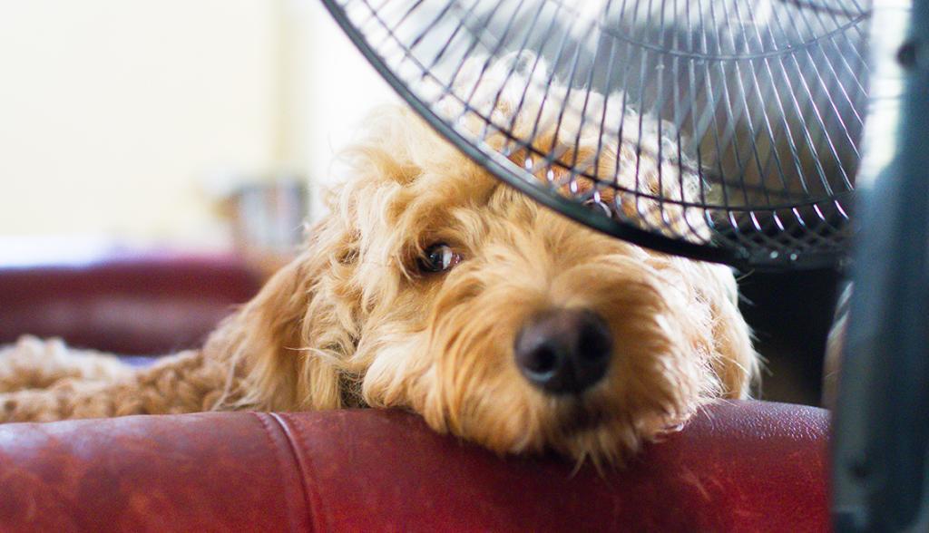 Mantén tu hogar fresco en temporada de calor y cuida la salud de tus mascotas